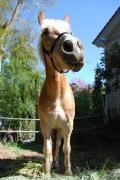 庭で馬を飼う