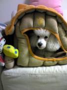 laef dog のブログ