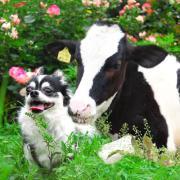 うしカメラ 牛写真家の牧場訪問記