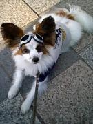 ベランダ果樹園と番犬