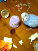 ☆鳥女の日記☆