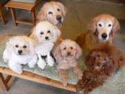 Dog Cafe ぽ庵