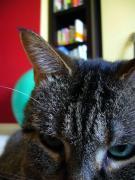 3本足の猫 レイジ君の闘病日記