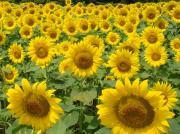 菜食生活 超健康 太陽のまなざしへ