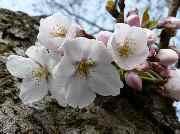 茂ちゃんの春夏秋冬フォト・ジャーニー