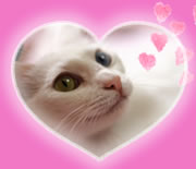 フェアリーナと猫たちの「ニャゴにゃ語TIME」