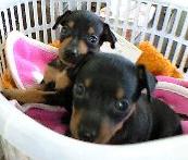 犬活|犬の病気情報ブログ