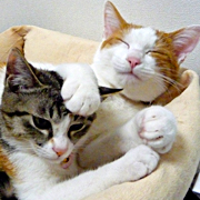梅蔵猫日記