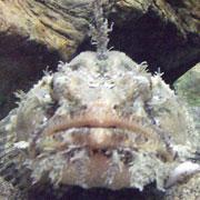 「えのすい」へGO!:新江ノ島水族館密着ブログ