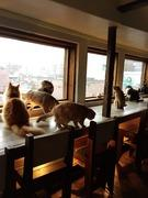 福岡猫カフェ 美猫