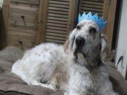 我が家のウィリー王子