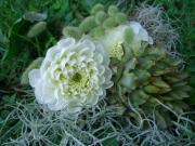 誕生花☆花言葉