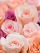 Vivid姫Roseさんのプロフィール