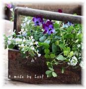 A LaLaLa気分の庭と布たち
