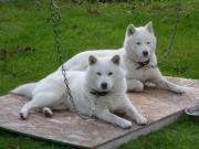 北海道犬仲良し母・娘&紅ママ