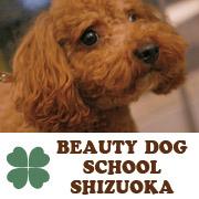 ビューティードッグスクール静岡-ブログ!