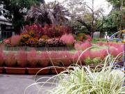 花好きおばさんの 園芸ボランティア日記