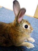 ウサギは何をしてもカワイイ!