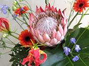 Flowerブログ*花のフリー写真素材*