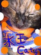 水玉Cats