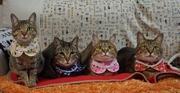 SANGO! キジトラ猫と魚と私
