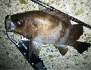 富山県釣り情報 ALL NIGHT FISHING
