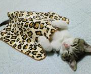 猫のサイン〜メタボ猫日記