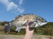 おいしい魚を釣るぞぉ〜