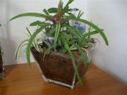 観葉植物とメダカの日記
