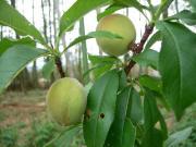 自然農法への道