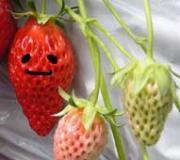 旬の果物を食べ比べる日記。〜味と栄養の記録帳〜