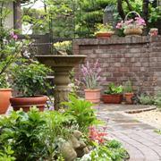 Daddy's Garden