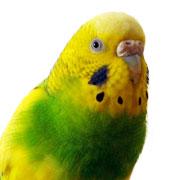 鳥水木日誌