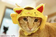 猫まる日和 U+E&茶屋