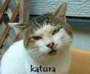 猫いち@ちはるさんのプロフィール