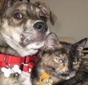 眉シロ犬と鼻クロ猫ダイアリー