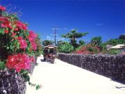 CoCo発沖縄のトム