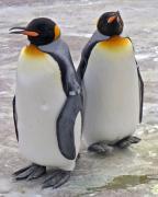 ペンギンズ・バー 〜いつまでもデブだと思うなよ〜