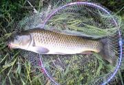 ポンちゃんの鯉釣り日記