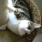 Life with Cats 〜ネコとの暮らし〜