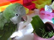 小鳥の相談室 ねむのき 〜準備室〜