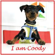 Welcome Coody