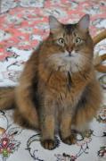 ソマリ猫「ミータ」のひとり言