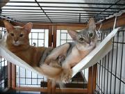 ルシバロ観察日記-猫2匹のダルダル日記-