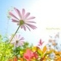 小さな小さなココロの花