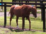 あのときの馬