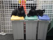 甲斐犬パラダイス −横浜狩場荘−