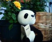 パンダの庭