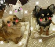 ☆チワックス&チワワのSMILE☆DIARY☆