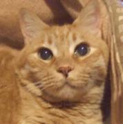 一日一猫「いちねこブログ」